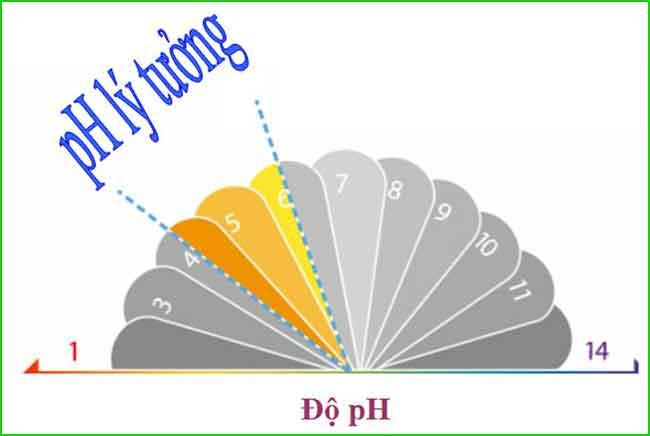 Dầu gội cân bằng pH cho tóc khô xơ hư tổn