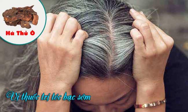 Hà thủ ô trị tóc bạc sớm hiệu quả